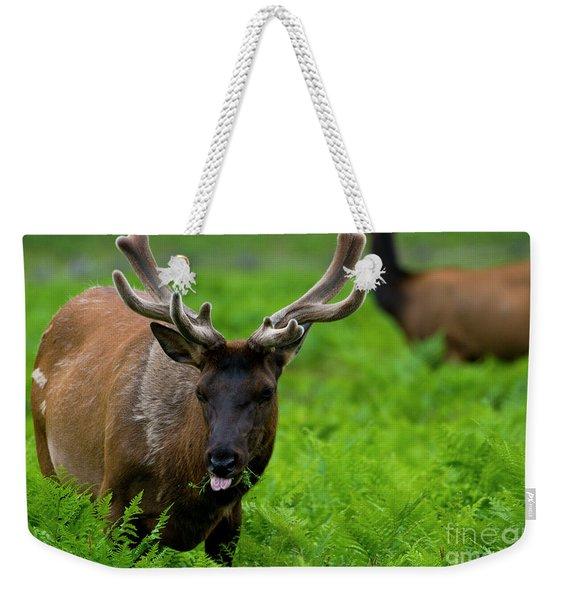 Grazing In Vlvet Weekender Tote Bag
