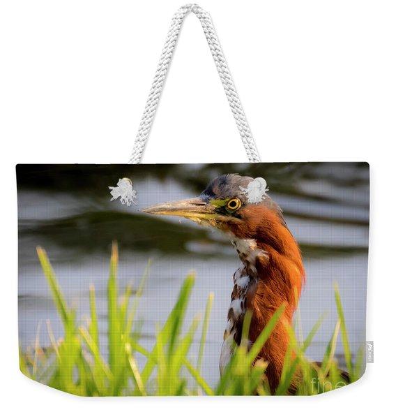 Green Heron Closeup  Weekender Tote Bag