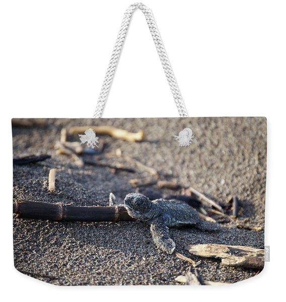 Green Sea Turtle Hatchling Weekender Tote Bag