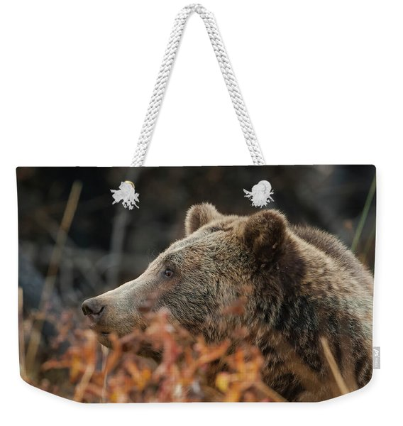 Grizzly Bear Portrait In Fall Weekender Tote Bag