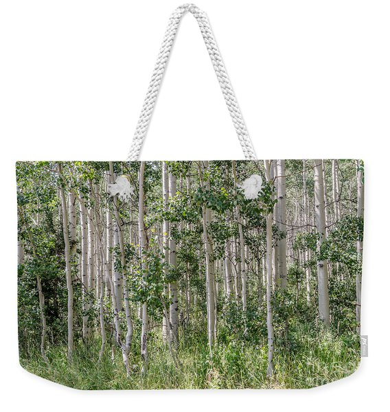 Grove Of Quaking Aspen Aka Quakies Weekender Tote Bag