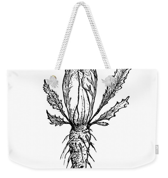 Hand Drawn Of Chicory Isolated On White Background Weekender Tote Bag