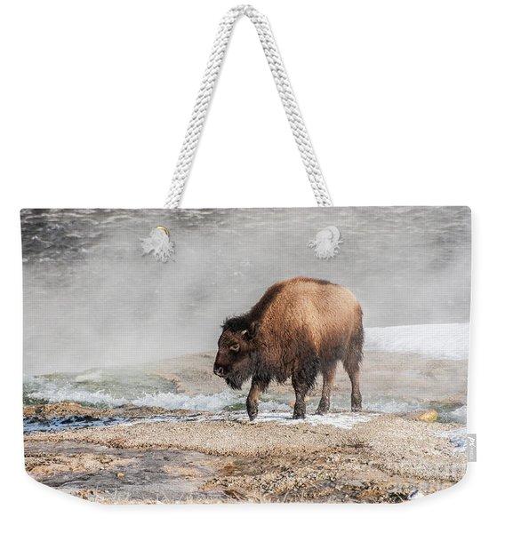 Handsome Young Bison Weekender Tote Bag