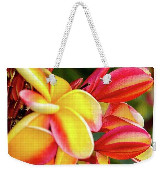 Hawaii Plumeria Flowers In Bloom Weekender Tote Bag