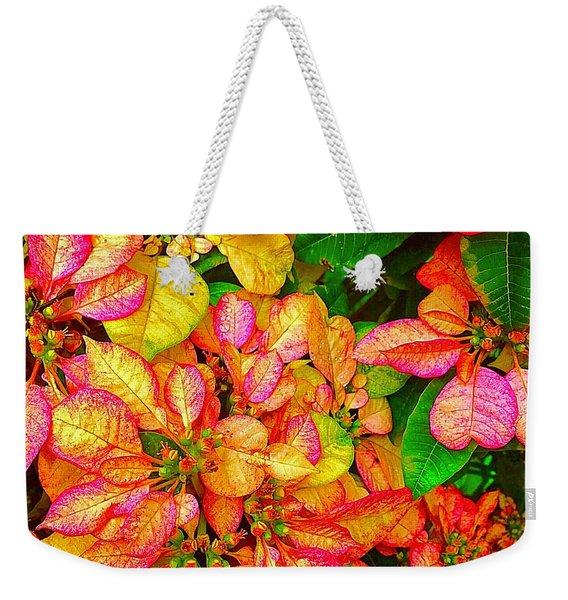 Hawaiian Poinsettias In Puna Weekender Tote Bag