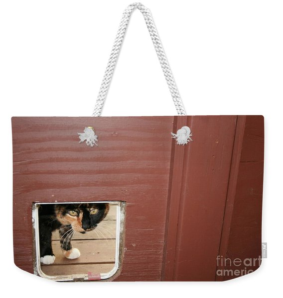 Weekender Tote Bag featuring the photograph Curly Peeking by Cynthia Marcopulos
