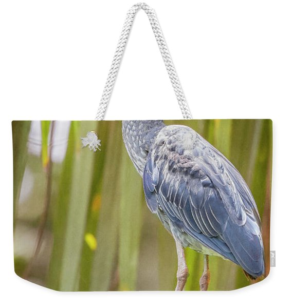 Yellow-crowned Night Heron Costa Rica Weekender Tote Bag