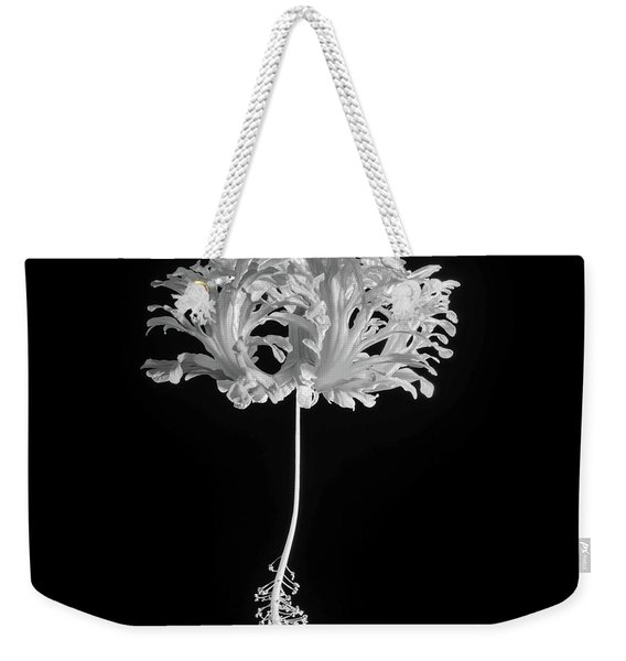 Hibiscus Schizopetalus Against A Black Background In Black And White Weekender Tote Bag