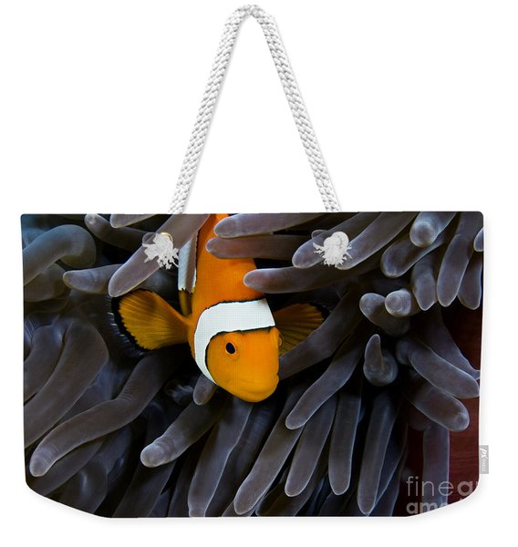 Hiding Clown Anemonefish Weekender Tote Bag