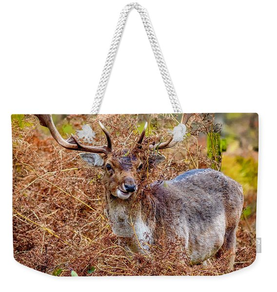 Weekender Tote Bag featuring the photograph Hiding In The Bracken by Nick Bywater