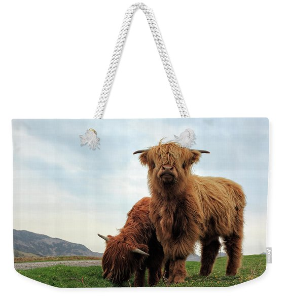 Highland Cow Calves Weekender Tote Bag
