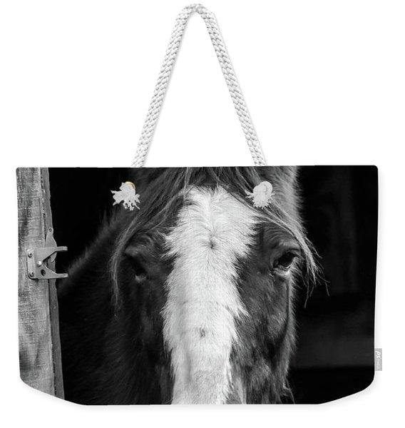Horse Looking Through Stall Weekender Tote Bag