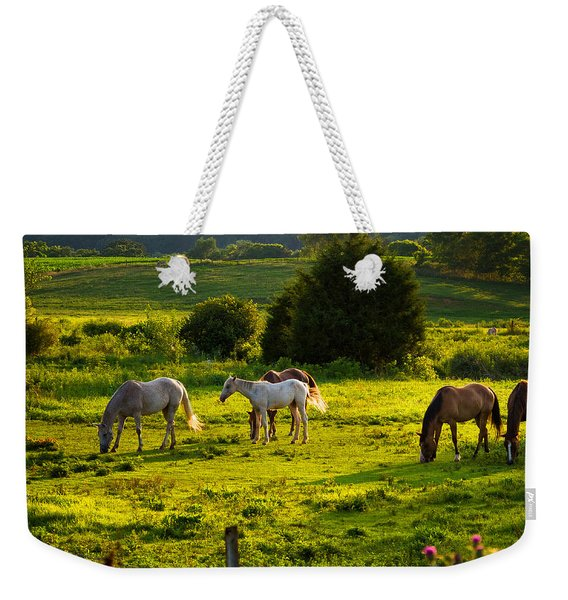 Horses Grazing In Evening Light Weekender Tote Bag