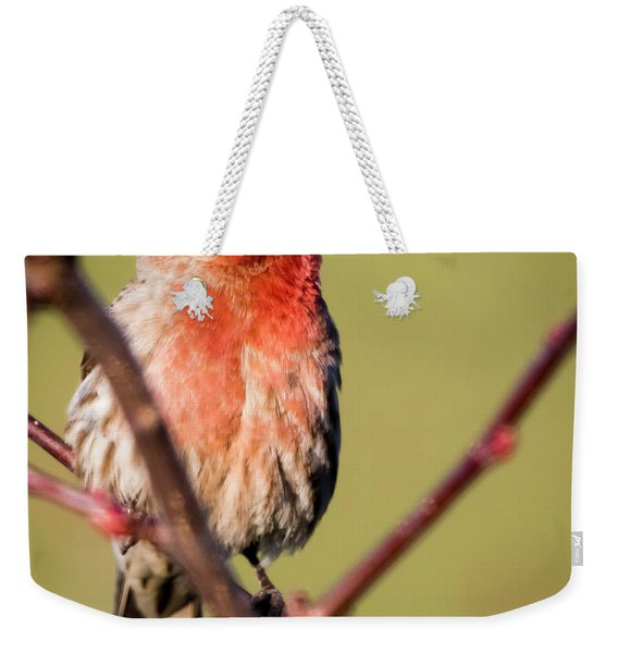 House Finch In Full Color Weekender Tote Bag