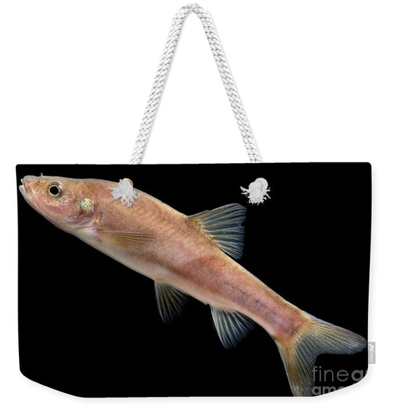 Huanjiang Golden Line Barbel Weekender Tote Bag