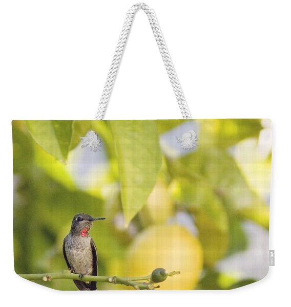 Hummingbird In Lemon Tree Weekender Tote Bag