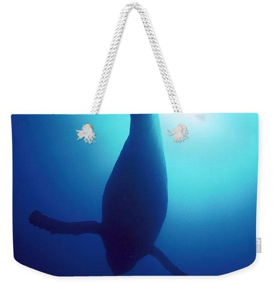 Humpback Whale Megaptera Novaeangliae Weekender Tote Bag