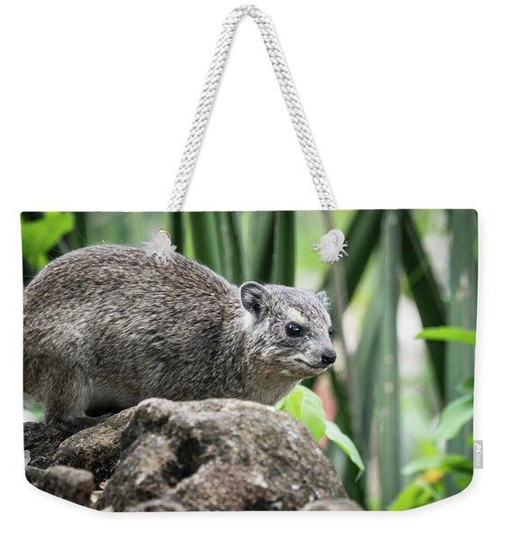 Weekender Tote Bag featuring the photograph Hyrax by Robin Zygelman