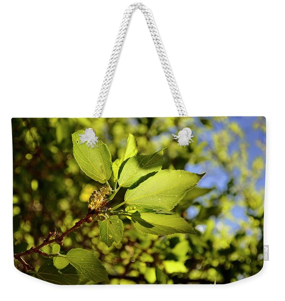 Weekender Tote Bag featuring the photograph Illuminated Leaves by Ron Cline