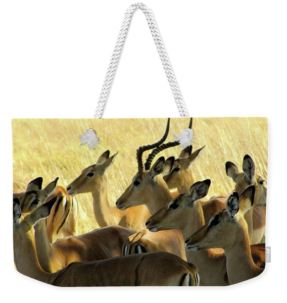 Impalas In The Plains Weekender Tote Bag