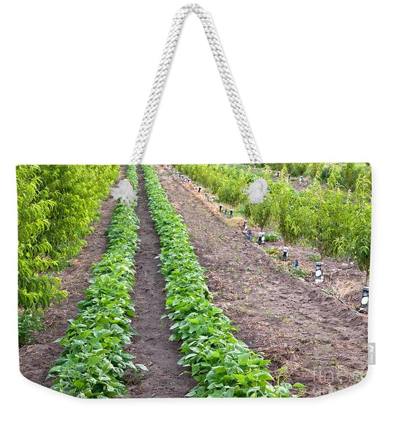 Intercropped Trees And Beans Weekender Tote Bag