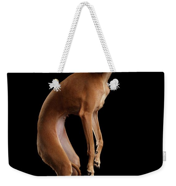 Italian Greyhound Dog Jumping, Hangs In Air, Looking Camera Isolated Weekender Tote Bag