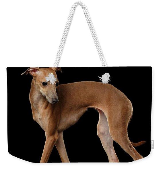 Italian Greyhound Dog Standing  Isolated Weekender Tote Bag