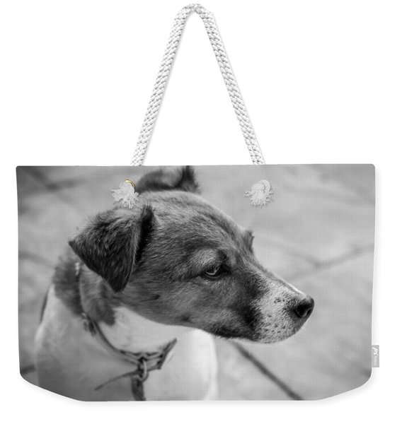 Weekender Tote Bag featuring the photograph Jack Russell by Nick Bywater