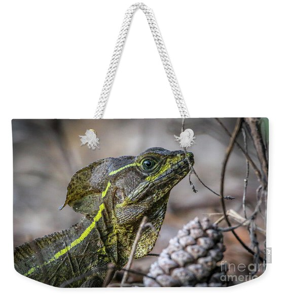 Weekender Tote Bag featuring the photograph Jesus Lizard #2 by Tom Claud