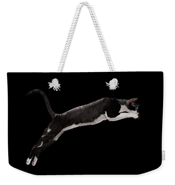 Jumping Cornish Rex Cat Isolated On Black Weekender Tote Bag