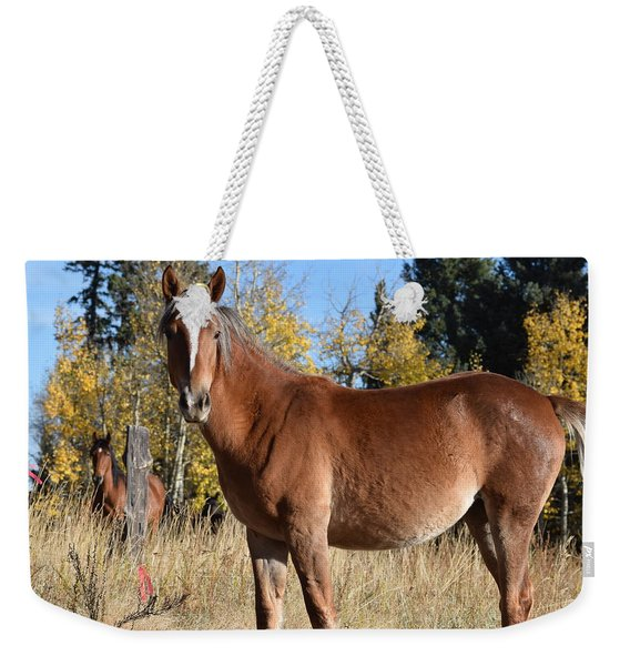 Weekender Tote Bag featuring the photograph Horse Cr 511 Divide Co by Margarethe Binkley