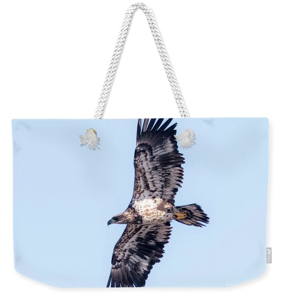 Juvenile Bald Eagle 2017 Weekender Tote Bag