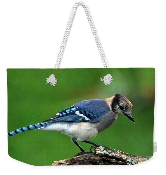 Juvenile Blue Jay  Weekender Tote Bag