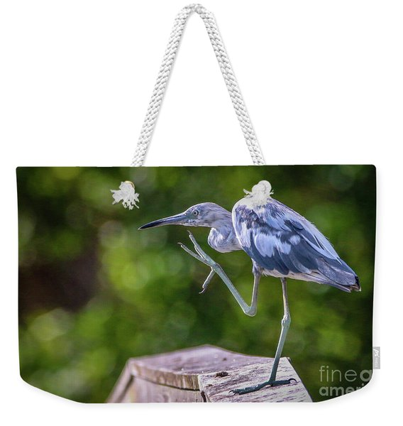 Weekender Tote Bag featuring the photograph Juvenile Little Blue Heron by Tom Claud