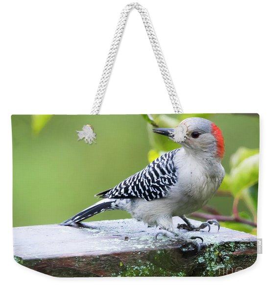 Juvenile Red-bellied Woodpecker In The Rain Weekender Tote Bag