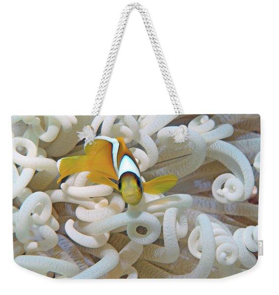 Juvenile Red Sea Clownfish, Eilat, Israel 3 Weekender Tote Bag