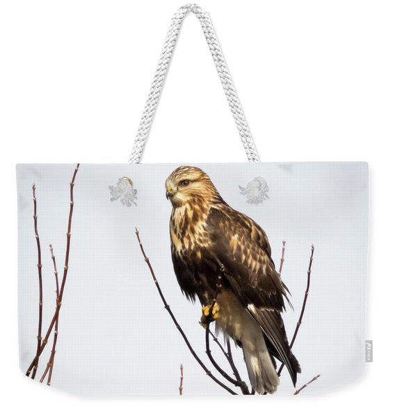 Juvenile Rough-legged Hawk  Weekender Tote Bag