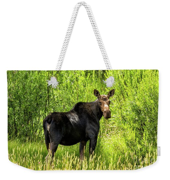 Keep Your Distance Wildlife Art By Kaylyn Franks Weekender Tote Bag