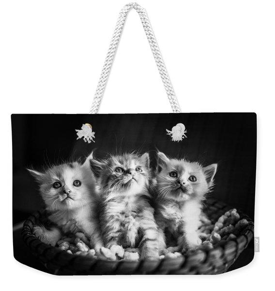 Kitten Trio Weekender Tote Bag