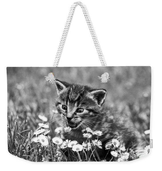 Kitten With Daisy's Weekender Tote Bag