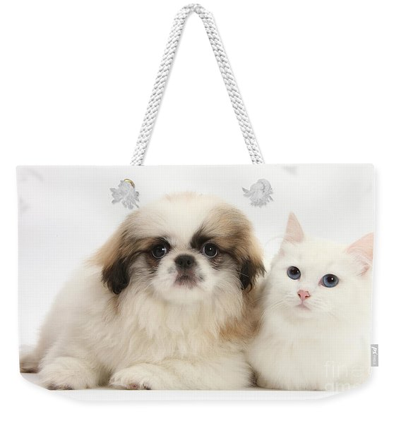 Kitten With Pekinese Puppy Weekender Tote Bag