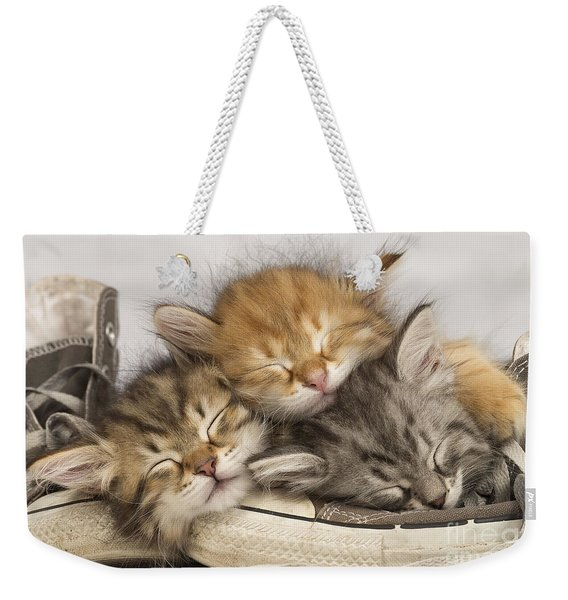 Kittens Asleep On Shoes Weekender Tote Bag