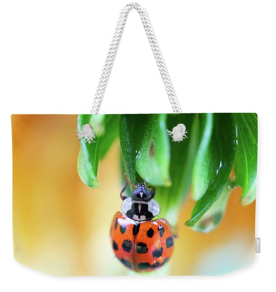 Weekender Tote Bag featuring the photograph Lady Bug In A Heatwave by Brian Hale