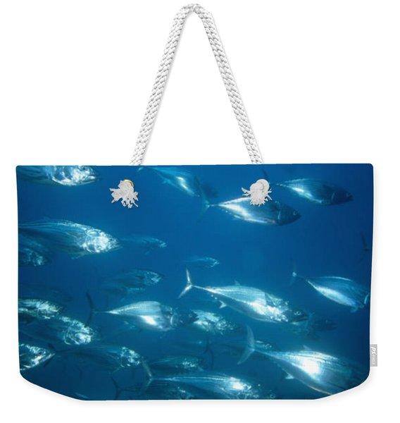 Lare Group Of Schooling Skipjack Tuna Weekender Tote Bag