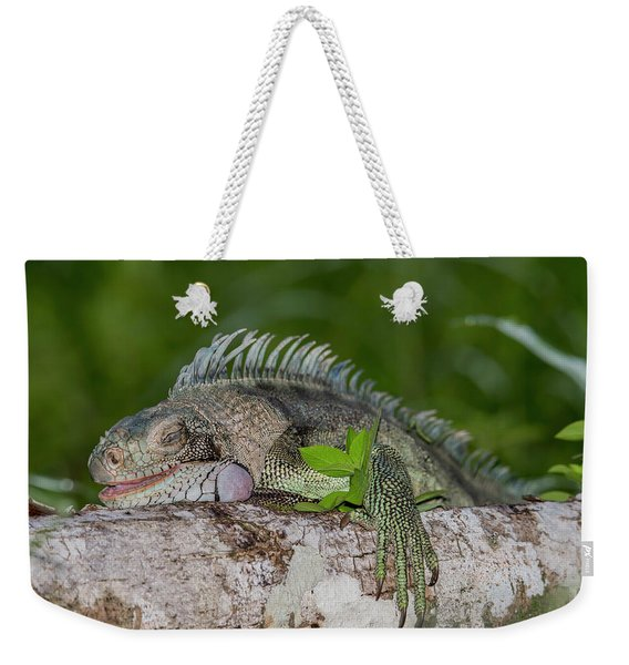 Weekender Tote Bag featuring the photograph Lazy Iguana by Rachel Lee Young