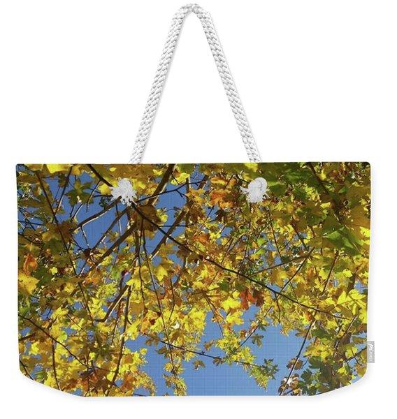 Leaves And Light Weekender Tote Bag