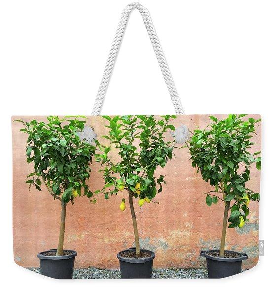 Lemon Trees With Ripe Fruits Weekender Tote Bag