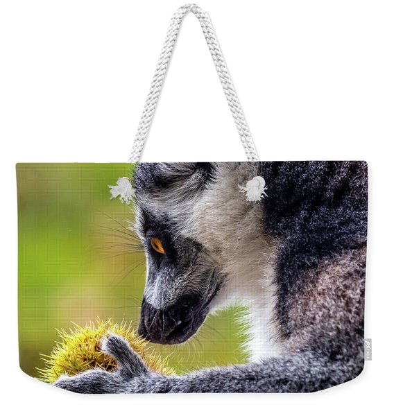 Weekender Tote Bag featuring the photograph Lemur And Sweet Chestnut by Nick Bywater