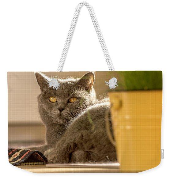 Lilli The Cat Weekender Tote Bag