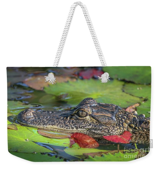 Weekender Tote Bag featuring the photograph Lily Pad Gator by Tom Claud